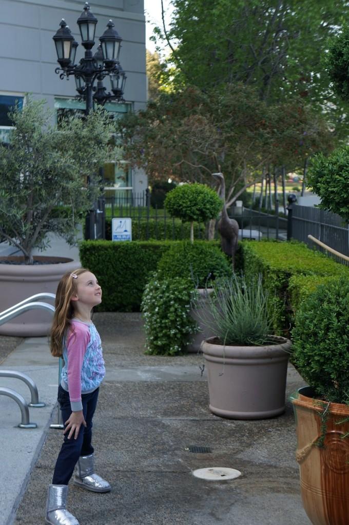CA sofitel landscaping