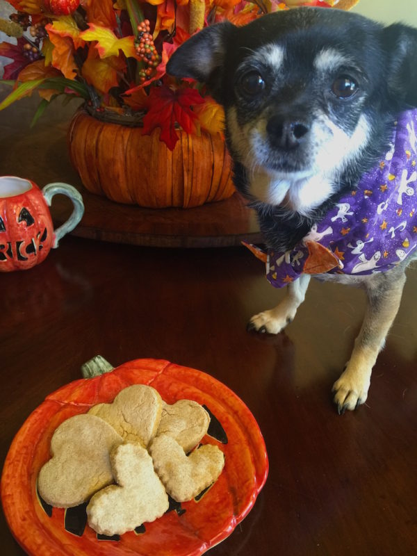 pumpkin-dog-treats-mom-style-lab